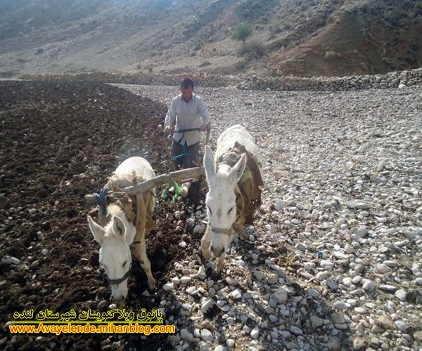 فصل شخم, خبرلنده,روستای تراب,شخم سنتی