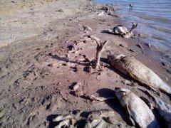 فاجعه زیست محیطی, خبرلنده, رهاسازی ماهی مرده در رودخانه, آلودگی زیست محیطی, رود خانه جن موگرمون, حفاظت محیط زیست