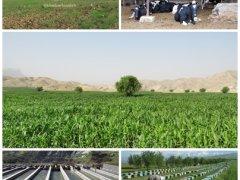 خبرلنده, جهاد کشاورزی, پیروزی انقلاب اسلامی, دهه فجر, بسیج سازندگی