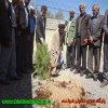 غرس نهال در اداره تبليغات اسلامي شهرستان لنده/تصوير