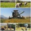 برداشت برنج ,خبرلنده, شالیزارها ,رودخانه مارون ,رودخانه جن, شهرستان لنده, فجر ,شمیم ,چمپا ,گرده ,جهاد کشاورزی, لنده