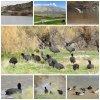 دریاچه برم الوان,خبرلنده,شهرستان بهمئی,اخبار لنده,تالاب,چشم اندازی بی نظیر,میزبانی برم الوان,مرغابی,پرندگان شمالی,سیبری
