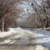 یاسوج بعد از سومین برف به روایت تصویر